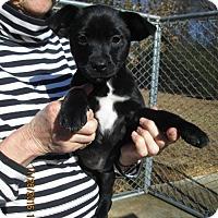 Adopt A Pet :: EMMIE LOU - Williston Park, NY