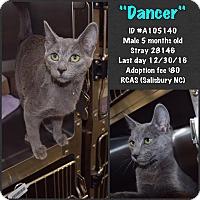 Adopt A Pet :: Dancer - Salisbury, NC