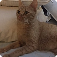 Adopt A Pet :: Annabelle Lee - Highland Park, NJ