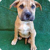 Adopt A Pet :: Kira - San Diego, CA