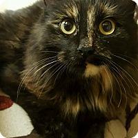 Adopt A Pet :: Laurel Rose - Knoxville, TN