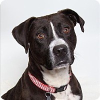 Adopt A Pet :: Kookie Elmo - San Luis Obispo, CA