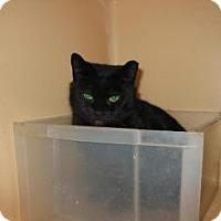 Adopt A Pet :: Lina - Brooklyn, NY