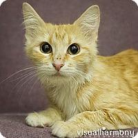 Adopt A Pet :: Maddie - Phoenix, AZ