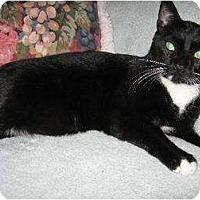 Adopt A Pet :: Valentine - Fullerton, CA