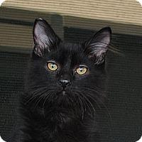 Adopt A Pet :: Yoshi - Palmdale, CA