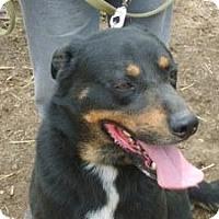 Adopt A Pet :: Stud - latrobe, PA
