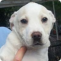 Adopt A Pet :: BBoy#4M - Orlando, FL