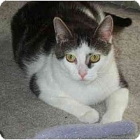 Adopt A Pet :: Mia - Jenkintown, PA