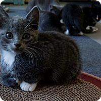 Adopt A Pet :: Ty - CARVER, MA