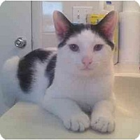 Adopt A Pet :: Hamilton (JC) - Little Falls, NJ