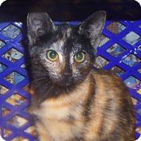 Adopt A Pet :: Dot - East Brunswick, NJ