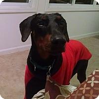 Adopt A Pet :: Guiness - New Richmond, OH