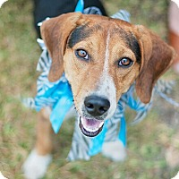 Adopt A Pet :: Baxter - Kingwood, TX