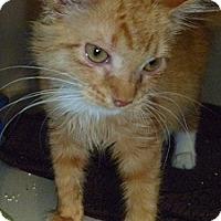 Adopt A Pet :: Fabian - Hamburg, NY
