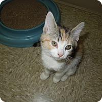 Adopt A Pet :: Kylie - Medina, OH