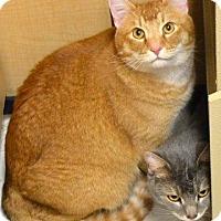 Adopt A Pet :: ZIGGY - Sacramento, CA