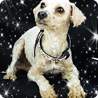Adopt A Pet :: Adopted!! Cruiser - S. TX - Tulsa, OK