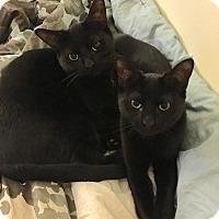 Adopt A Pet :: Hannah - Horsham, PA