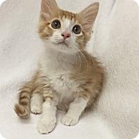 Adopt A Pet :: Kylo Ren - Mission Viejo, CA