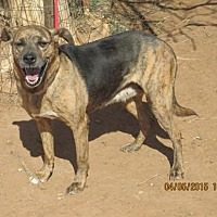 Shepherd (Unknown Type) Mix Dog for adoption in Anton, Texas - Peanut-Butter