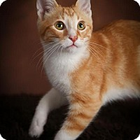 Adopt A Pet :: Pickles C1396 - Shakopee, MN