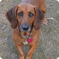 Adopt A Pet :: Saraphena - Manchester, NH