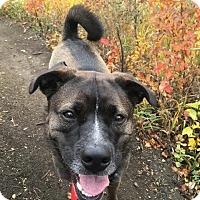 Adopt A Pet :: Cerberus - Saskatoon, SK
