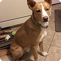 Adopt A Pet :: Matthew - Harrison, NY