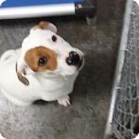 Adopt A Pet :: Jesse - Paducah, KY
