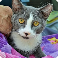 Adopt A Pet :: Louie - Lake Worth, FL
