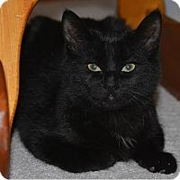 Adopt A Pet :: Charli - Toronto, ON