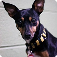Adopt A Pet :: Ramona - Stafford, VA