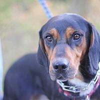 Adopt A Pet :: Elvis - Palmyra, NE