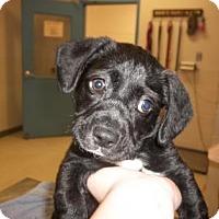 Adopt A Pet :: Lily Grace - Gulfport, MS