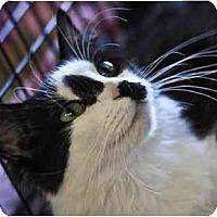Adopt A Pet :: Blanche - Little Falls, NJ