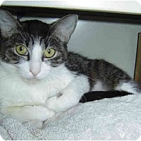Adopt A Pet :: Romeo - Modesto, CA
