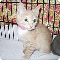 Adopt A Pet :: Jumpy - Colmar, PA