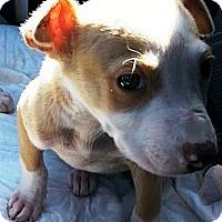 Adopt A Pet :: Rupert - Vista, CA