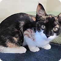 Adopt A Pet :: Cous Cous - Riverhead, NY