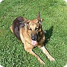 Adopt A Pet :: Nikko