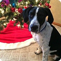 Adopt A Pet :: Rudy - Broomfield, CO