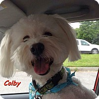 Adopt A Pet :: Colby-adoption pending - Mississauga, ON