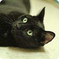 Adopt A Pet :: Cookie - Richmond, VA
