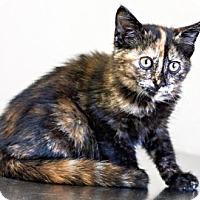 Adopt A Pet :: Angora - Visalia, CA