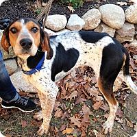 Adopt A Pet :: Blue - Fennville, MI