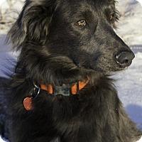 Adopt A Pet :: Jasper - Pueblo West, CO