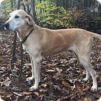 Adopt A Pet :: Sweet Jake ($400) - Harrisonburg, VA