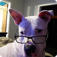 Adopt A Pet :: LUKE (CP KW) - Tampa, FL