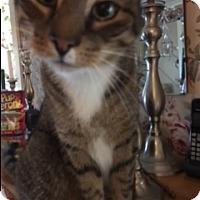 Adopt A Pet :: Sammy Courtesy Listing - Sparta, NJ